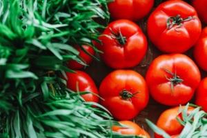 トマトの栽培方法を紹介。家庭菜園でできる植え付けや育て方の注意点