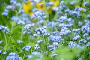 3月15日の誕生花|花言葉の由来、誕生日の有名人、何の日かも解説