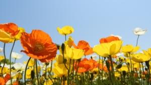 3月4日の誕生花 花言葉の由来、誕生日の有名人、何の日かも解説