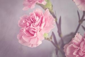 5月に咲く花一覧!ガーデニングで人気の品種の特徴や花言葉も紹介