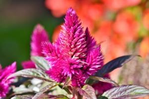 11月に咲く花一覧!ガーデニングで人気の品種の特徴や花言葉も紹介