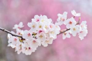 4月に咲く花一覧!ガーデニングで人気の品種の特徴や花言葉も紹介