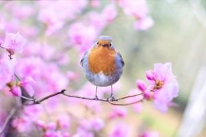 3月5日の誕生花|花言葉の由来、誕生日の有名人、何の日かも解説