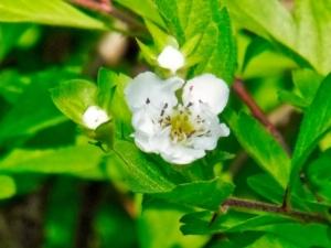 5月13日の誕生花|花言葉の由来、誕生日の有名人、何の日かも解説