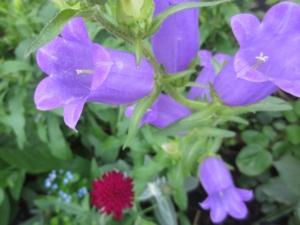 5月15日の誕生花|花言葉の由来、誕生日の有名人、何の日かも解説