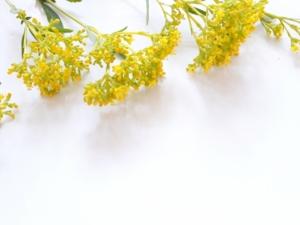 オミナエシ(女郎花)の花言葉の意味・由来|花の特徴なども紹介