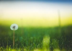 5月3日の誕生花 花言葉の由来、誕生日の有名人、何の日かも解説