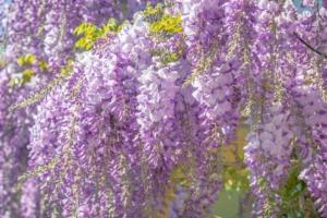 5月21日の誕生花|花言葉の由来、誕生日の有名人、何の日かも解説