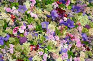 5月12日の誕生花|花言葉の由来、誕生日の有名人、何の日かも解説