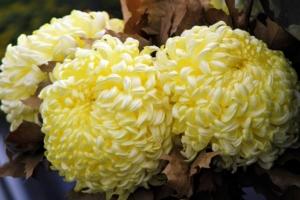 10月に咲く花一覧!ガーデニングで人気の品種の特徴や花言葉も紹介