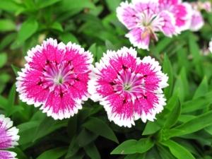 5月29日の誕生花|花言葉の由来、誕生日の有名人、何の日かも解説