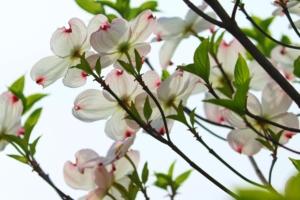 4月23日の誕生花|花言葉の由来、誕生日の有名人、何の日かも解説