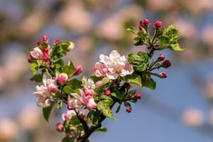 4月8日の誕生花|花言葉の由来、誕生日の有名人、何の日かも解説