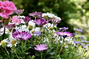 4月1日の誕生花|花言葉の由来、誕生日の有名人、何の日かも解説