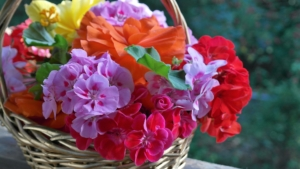 5月18日の誕生花 花言葉の由来、誕生日の有名人、何の日かも解説