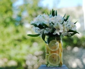 5月22日の誕生花|花言葉の由来、誕生日の有名人、何の日かも解説