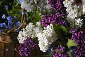 5月30日の誕生花|花言葉の由来、誕生日の有名人、何の日かも解説