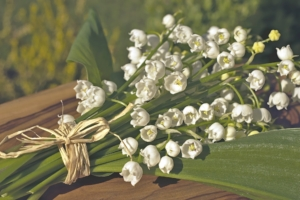 5月28日の誕生花|花言葉の由来、誕生日の有名人、何の日かも解説
