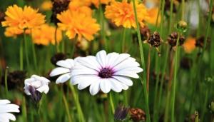 4月6日の誕生花|花言葉の由来、誕生日の有名人、何の日かも解説