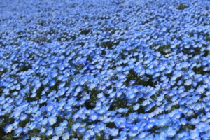 4月30日の誕生花|花言葉の由来、誕生日の有名人、何の日かも解説