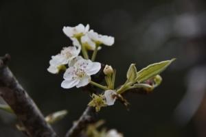 4月20日の誕生花|花言葉の由来、誕生日の有名人、何の日かも解説