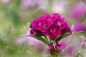 4月25日の誕生花|花言葉の由来、誕生日の有名人、何の日かも解説