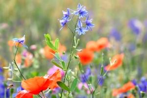 4月19日の誕生花|花言葉の由来、誕生日の有名人、何の日かも解説
