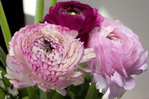 4月3日の誕生花|花言葉の由来、誕生日の有名人、何の日かも解説