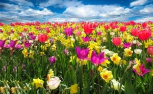 ガーデニングで人気の品3月に咲く花12選!種の特徴や花言葉も紹介