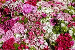 5月10日の誕生花 花言葉の由来、誕生日の有名人、何の日かも解説