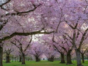 4月21日の誕生花|花言葉の由来、誕生日の有名人、何の日かも解説