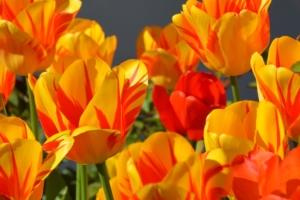 4月10日の誕生花|花言葉の由来、誕生日の有名人、何の日かも解説