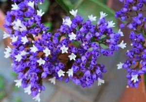 4月18日の誕生花|花言葉の由来、誕生日の有名人、何の日かも解説