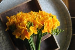 フリージアの花言葉と由来|品種、色別・英語の花言葉、怖い意味は?
