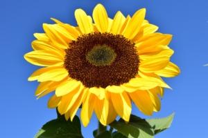 8月に咲く花一覧!ガーデニングで人気の品種の特徴や花言葉も紹介